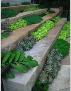 Plants in stair seams.