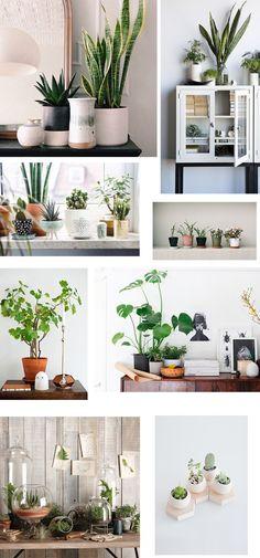 Det er ikke så længe siden, at jeg fortalte om min besættelse af grønne planter i boligindretningen. Personligt er jeg nok også kommet til at overdrive en smule, og der er nok gået lige lovligt meget planteskole i den, hjemme hos mig. Jeg har i hvert fald lovet mig selv, at jeg ikke må køb