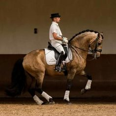Dressage with PRE