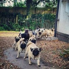 """""""Release the Hounds!!!"""""""