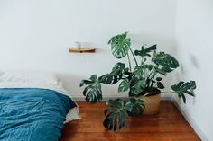 The beautiful home of Anna & Asuka of @wingnutandco featuring our indigo duvet. Read & see more on the IN BED Journal at inbedstore.com (link in bio). Image @jesskneebone #inbedstore #inbedjournal by inbedstore http://ift.tt/1OswMRg