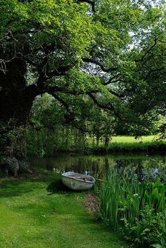 """In a private Sussex garden open to the public for charity under the National Gardens """"Yellow Book"""" Scheme Beautiful Beautiful World, Beautiful Gardens, Beautiful Places, Sussex Gardens, Nature Aesthetic, Garden Cottage, Dream Garden, Beautiful Landscapes, Aesthetic Pictures"""