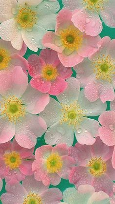 Annual Gardening And Annual Garden Deign Whatsapp Wallpaper, Iphone 5 Wallpaper, Pastel Wallpaper, Flower Wallpaper, Wallpaper Backgrounds, Wallpaper Borders, Pink Flowers, Beautiful Flowers, Colorful Flowers