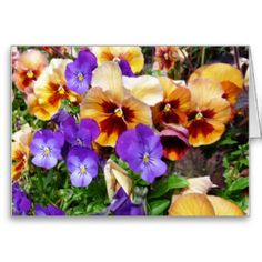 Pansies - happy faces card