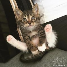 _chat: À peine 2 mois et déjà pudique. <3 ***