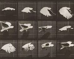 eadweard muybridge bird - Google Search