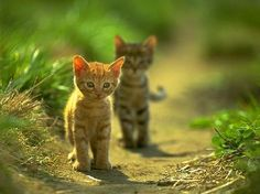 were my cats ever this young? もっと見る