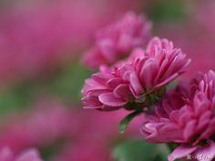 Samuel David Lehrer-Lovely Flowers
