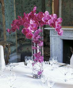 Purple fuschia pink orchids