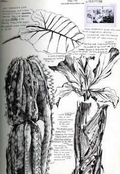 observational drawing of plants - Iris Cheung, IB Art