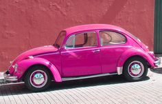 I WANT A BUG!!!!!