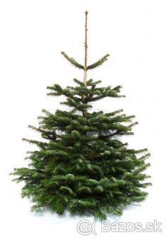Predaj živich vianočných stromčekov - 1