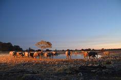 namibia_etosha_elefanti