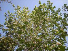 植物の写真/greenバージョン→何気ない写真、意外と出番があったりします。
