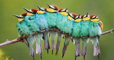 16+ фотографии птиц обнимаются вместе для тепла будет таять ваше сердце | Скучно Панда