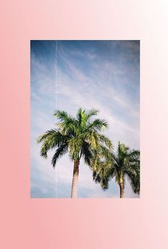 palm tree dreams | ban.do