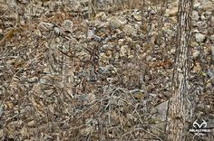 Can you find him ?