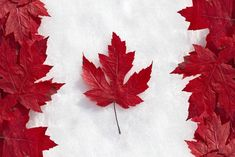 The Canadian dollar fell to its lowest level in six years on Wednesday, after the Bank of Canada cut its key interest rate. Canada is str. I Am Canadian, Canadian Maple, Canadian Flags, Canadian Culture, Canadian Things, Canadian History, Visa Canada, Canada Eh, Toronto Canada