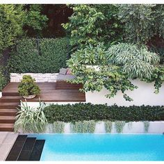 4 of the best swimming pool designs. Photography by Brigid Arnott. Design by Good manors. Small Swimming Pools, Best Swimming, Swimming Pool Designs, Outdoor Pool, Outdoor Gardens, Tropical Pool Landscaping, Landscaping Ideas, Modern Landscaping, Moderne Pools