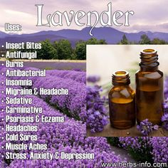❤ Essential Oil Of The Day: Lavender ❤