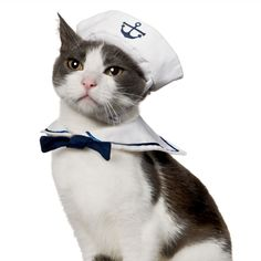 Namsan Puppy Cat Cosplay,Cat Hat,cat Costume,Dog Cat Halloween Dress,Cat Toys * Find out more about the great product at the image link. (This is an affiliate link and I receive a commission for the sales) Sailor Halloween Costumes, Chat Halloween, Christmas Costumes, Halloween Christmas, Costume Halloween, Costume Chat, Pet Costumes, Kitten Costumes, Food Costumes