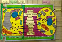 Cell Biology Bulletin Board for My 7th grade classroom.