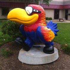 """cool"" Jayhawk  #Jayhawks on Parade"