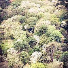 #japan #kyoto #japantravel #pupuru #wifirental