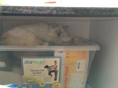 Jinx decided that she found the best hidey hole for a quick nap #cat #ragdoll #manager #trouble #GGJewellery