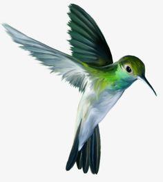 Hummingbird PNG image with transparent background Hummingbird Drawing, Hummingbird Pictures, Hummingbird Tattoo, Images Colibri, Art Colibri, Illustration Colibri, Watercolor Bird, Watercolor Paintings, Image Transparent