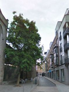"""Why is Dublin dedicating a 300-year-old tree to the city of Barcelona? - TheJournal.ie. """"It is a great honour for me to dedicate this olive tree to the City of Barcelona. The Cities of Barcelona and Dublin are twin Cities since 1998 and we in Dublin are happy to mark the 300th anniversary of the Siege of Barcelona, a very important time in the history of our sister city."""" #Barcelona #Catalonia #Dublin"""