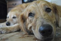 When puppies are left unattended, they find trouble. Naughty little Charlie was a dirty dog!