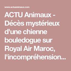 ACTU Animaux - Décès mystérieux d'une chienne bouledogue sur Royal Air Maroc, l'incompréhension et la douleur d'un maître en colère