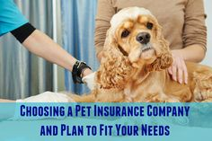 Choosing a Pet Insurance Company and Plan to Fit Your Needs | Pawsitively Pets