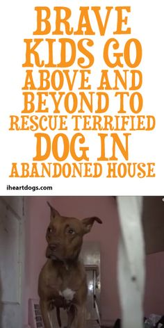 Brave Kids Go Above And Beyond To Rescue Terrified Dog In Abandoned House!