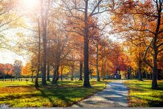 """Picture-A-Day (PAD n.2295) """"When You Look"""" ~Amy, DangRabbit Photography Autumn colors, Long Island, NY"""