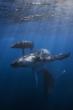 11 Simply Breathtaking Whale Photos by Gaby Barathieu Orcas, Save The Whales, Delphine, Ocean Creatures, Humpback Whale, Mundo Animal, Killer Whales, Underwater World, Sea World