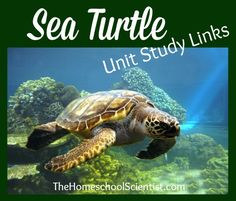 Heading for a beach with nesting sea turtles or just have a sea turtle lover in your house? We are sharing some of our sea turtles links to help in your research
