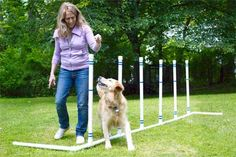 Build a Home Pet Agility Course from thisoldhouse.com; Side Note From Personal Experience: Saint Bernards should not be expected to complete any portion of an agility course