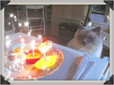 Toulouse's 3rd birthday! He was treated to delicious chicken cupcakes!