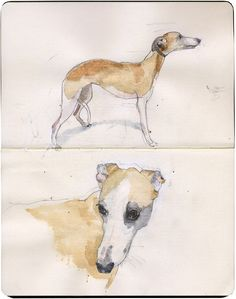 Whippet by Wil Freeborn, via Flickr