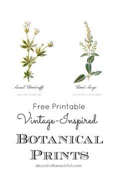 Vintage Inspired Botanical Prints - Free Printable