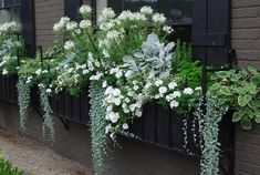 Window box in shades of green white: trailing white petunias, dichondra, dusty m. Window box in sh Container Flowers, Container Plants, Container Gardening, Succulent Containers, Balcony Plants, Garden Planters, Fall Planters, Garden Trellis, Garden Windows