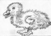 duckling drawings - Google Search