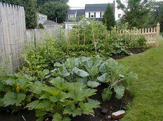 Vegetable garden by keaw
