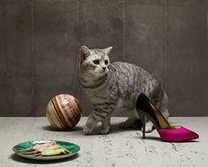 MWH_Gourmand_Cats_336_V2_b-copy