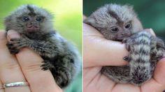 Top 10 Animales vertebrados más pequeños del mundo - Afecto Animal.