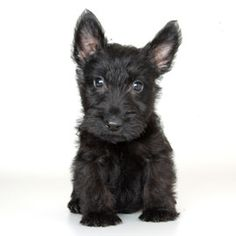 @Jenna Nelson Dooley  For your adorable baby animals collection. This is my puppy someday!