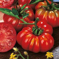Celebrity Hybrid Tomato Seeds Garden Seeds Vegetables 400 x 300