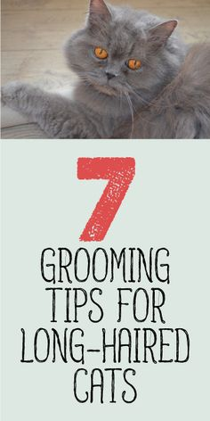 7 Grooming Tips For Long-Haired Cats